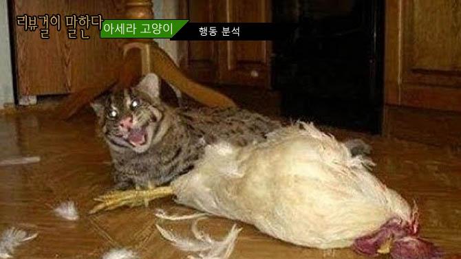 집고양이 길고양이