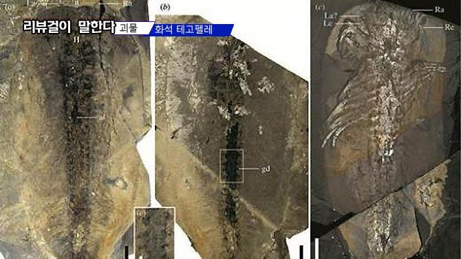 다리 50개 괴물 화석