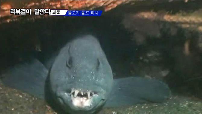 괴물 물고기