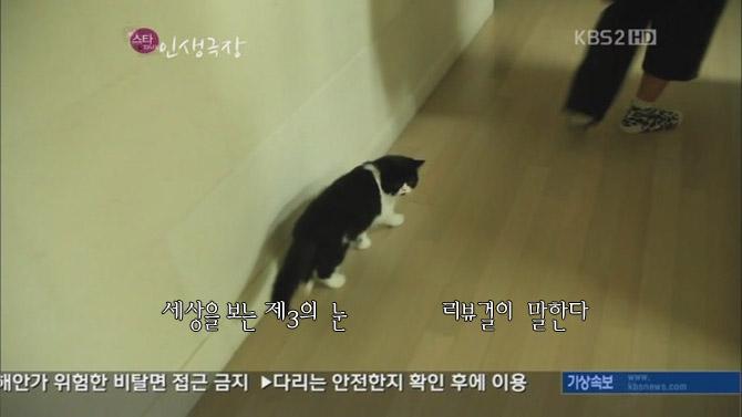 손담비 고양이